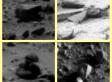 Curiosity : Objets Mystérieux Sur Mars ?